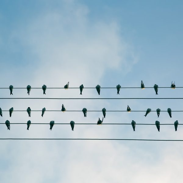 Birds perched on phone lines